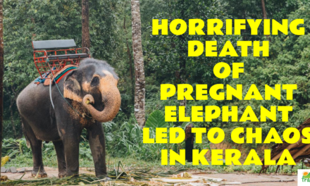 The horrifying death of a pregnant elephant led to chaos in Kerala